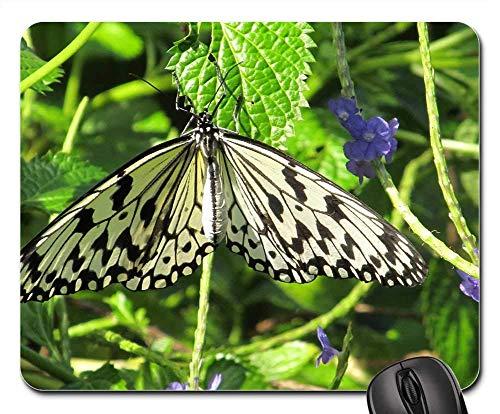Mousepad Papier Drachen Schmetterling Reis Papier Großer Baum Nymphe Gummi Arbeit Maus Matte Schule Spielmatte Spezial Tastatur Personalisiert Gedruckt Langlebig Mousepad 25X30Cm
