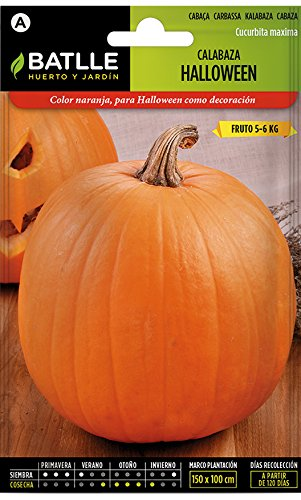 Batlle Gemüsesamen - Halloween Kürbis (6g Samen)