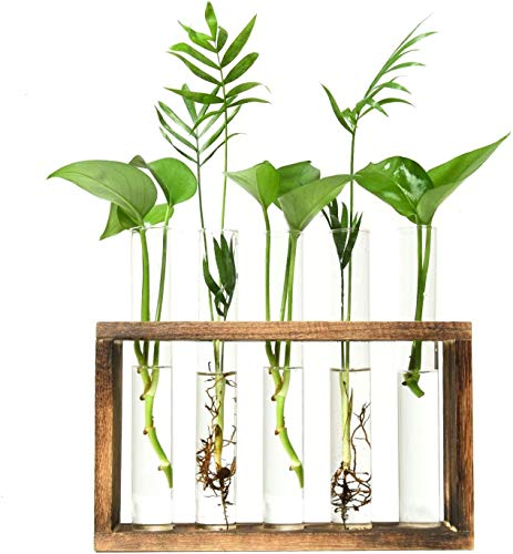 Glass Terrarium Planter, Bud Glass Test Tube Vase in Wood Stand, Tabletop Terrarium for Hydroponics Plants Propagation Station for Home Office Decor(5 Test Tubes)