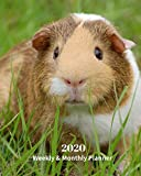 2020 Weekly and Monthly Planner: Brown Guinea Pig - Monthly Calendar with U.S./UK/ Canadian/Christian/Jewish/Muslim Holidays– Calendar in Review/Notes 8 x 10 in.-Animals Nature