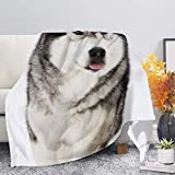 IBILIU Alaskan Malamute Dog Throw Blankets,Husky Dog pet Animal Winter Snow Soft CozyDecorative Bed Throw Blanket for Bedroom Living Rooms Sofa Couch 40'x50'