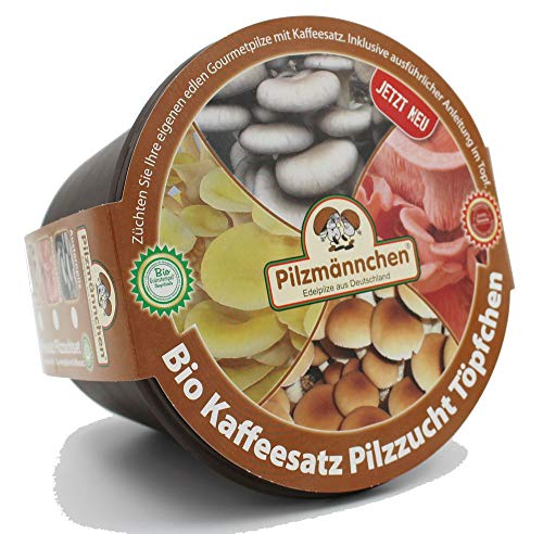 Bio Rosenseitling Kaffeesatz Töpfchen - Pilze selber züchten