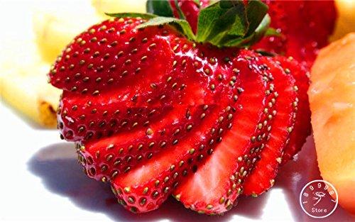 500 Hanging Seeds Strawberry --- Biens et fraîches Graines, Sweet & Juicy, bricolage jardin, Livraison gratuite, # 9MON8P