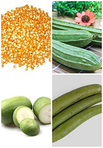 2017 Germination 95% + 6 Groupes Pour Select Graines de fruits 4 en 1 Lot Garden Hot Rare 6 Nutritif