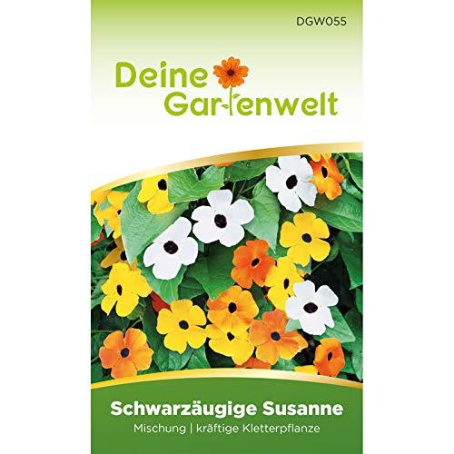 Schwarzäugige Susanne Samen | Mischung | Saatgut für Thunbergia alata | Kletterpflanze