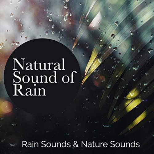 Rain Sounds & Nature Sounds