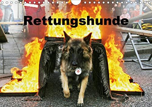 Rettungshunde (Wandkalender 2021 DIN A4 quer)