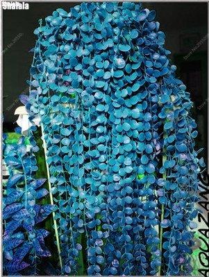 120 PC / bolso Semillas de enredadera japonés al aire libre multicolor Escalada Bonsai en maceta ornamental planta de vid fácil de cultivar 7