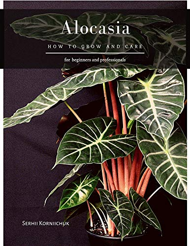 Alocasia: How to grow and care