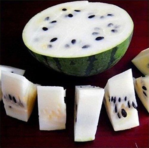 Livraison gratuite 11 des espèces rares Graines de pastèque chinoise à choisir délicieux fruits Melon d'eau graines bonsaïs - 50 Pièces 10