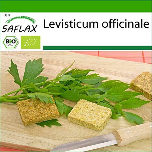 SAFLAX - Ecológico - Apio de monte o levístico - 100 semillas - Levisticum officinale