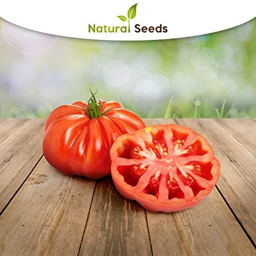 Tomate Montserrat, 25 semillas de Portugal, 100 % cultivo natural, muy poco común, tamaño ideal para ensaladas y aperitivos