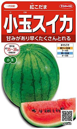 サカタのタネ 実咲野菜0630 小玉スイカ 紅こだま 00920630