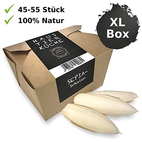 Haustier-Küche® | Sepiaschalen XL Box - Stück 8-12cm Größe – Kalzium, Nahrung, Futter für Reptilien – Schildkröten Zubehör | Sepia Schale für Bartagame