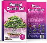 Set de semillas de árbol de bonsái para regalo de - Cultiva tu propio árbol de bonsái fácilmente con nuestro set de 8 semillas de árbol de bonsái