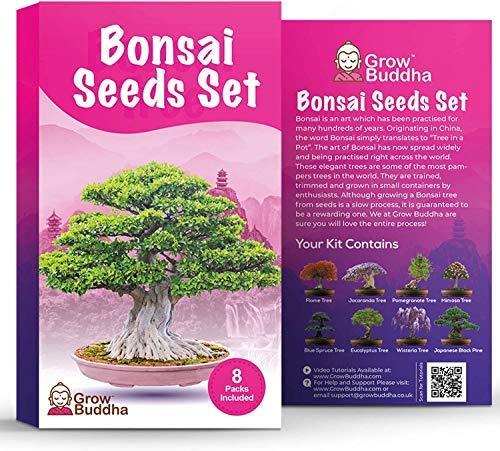 Bonsai Tree Seeds Gift Set da Buddha Crescere il proprio Tree facilmente con il nostro set di 8 Tree Seeds Dal livello principiante all esperto - un idea regalo per il kit di semi unico