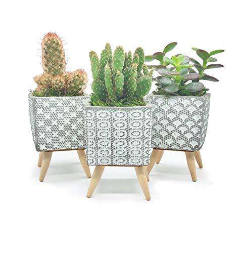 Premium Set of 3 Nordic Designer Cement Flower Pot Succulent/Cactus Planter Pots Bonsai Planters. with Legs