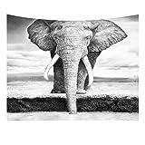 HOTNIU Tier Tapisserie Wandbehang - Schwarz-Weiß-Elefant Kunstdruck Tapestry Decor - Wandbehang Home Decor für Wohnzimmer Schlafzimmer Dorm Zimmer (Muster # 5, 150 * 100cm)