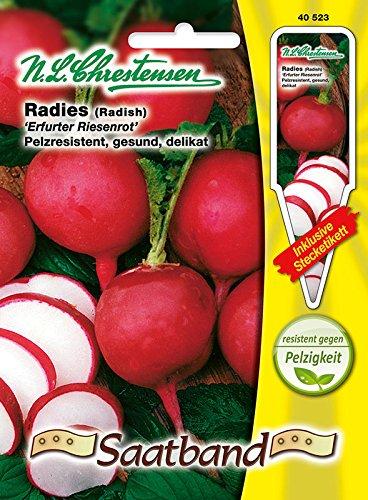 Radies 'Erfurter Riesenrot' Saatband , pelzresistent, gesund , delikat ( mit Stecketikett)