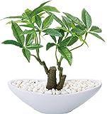 ポピー 造花 観葉植物 パキラ ポットS フェイクグリーン 人工 インテリア 店舗 オフィス カフェ H23cm W18cm GLA-1203
