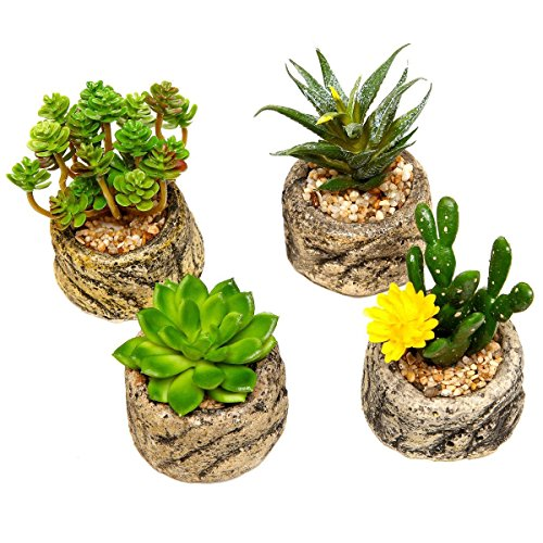 Higarden Cactus mix seeds 500 units / bag. DIY garden mini succulent cactus plants seeds