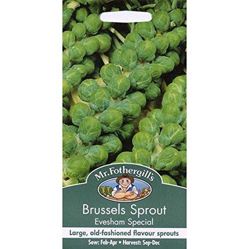 Graines de M. Fothergill - Bruxelles Sprout Evesham spéciale