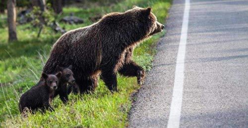 YOFUHOME Korsstygnskit mamma björn barn gör-det-själv 11 karat broderi hantverk nålspets mönster flerfärgad för startpaket heminredning (förstämplade satser) 40 × 50 cm