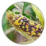*Selten* Regenbogen Mais/Bunter Mais/ca. 20 Samen/Ursprungsform/Selbstversorger -