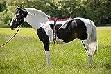 EKKIA Norton - Cuscino da equitazione, colore marrone/beige