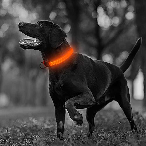 Illumifun LED Dog Collar, USB Rechargeable Glowing Pet Safety Collar, Adjustable Nylon Webbing Light Up Collars Make Your Dog Safe& Seen at Night(Orange, Medium)