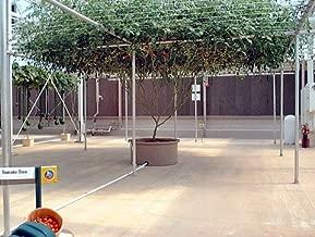 Best italian tree tomato seeds Reviews