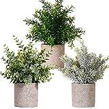 FagusHome Plantas Artificiales en Macetas 3 Piezas Mini Plantas de Eucalipto Rosemary Plants Artificiales en Macetas Plástico para Decoración