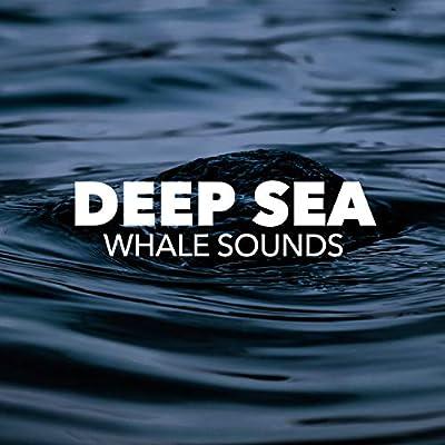 Deep Underwater Kingdom (Drone Mix)
