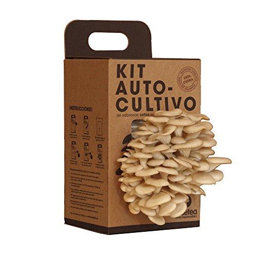Kit Autocultivo de setas ostra sobre posos de café reciclados de Resetea, 1