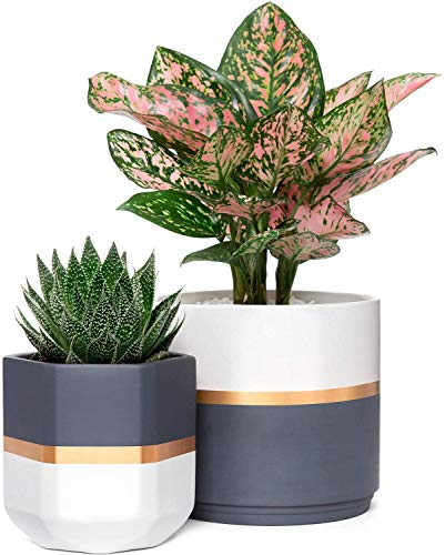 Mkouo Ceramic Planters 12.7cm and 16cm Indoor Flower Plant Pot Set of 2 Geometric Gardening Pots with Drainage for All House Plants, Herbs, Gold and Grey Detailing (Plants NOT Included)