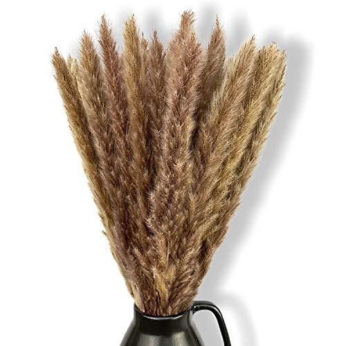 Pampasgras Deko getrocknet braun Trockenblumen 60-70cm lang I Boohoo Dekoration I Dekozweige für Inneneinrichtung I echte Dekoblumen I Phragmites Communis I Schilfrohr
