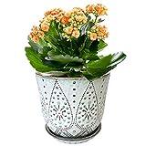 Gepege Ceramic Orchid Pot