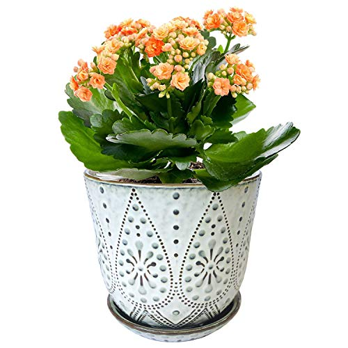 Gepege Ceramic Orchid Pot with Drainage Hole and Saucer for Plants, Large Round Indoor Succulent Planter Flower Pot, 6 Inch (Smoked White, Beaded)