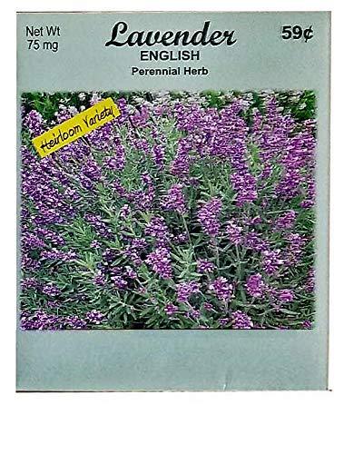 Set of 50 Flower Seed Packets! Flower Seeds in Bulk (50, Lavender)