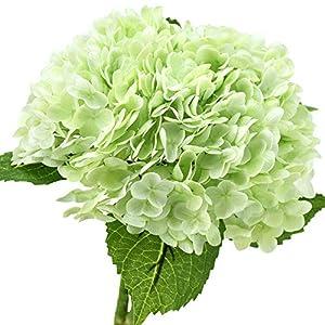 FiveSeasonStuff Real Touch Silk Hydrangea Flowers, 2 Large Long Stem Artificial Flowers for Floral Arrangements (Spring Green)