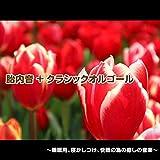 交響曲 第9番 ニ短調 「合唱付き」作品125/第4楽章:歓喜の歌 [抜粋] (胎内音入りオルゴールバージョン)