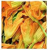 Semi di Zucchino da Fiori - Verdure - Cucurbita Pepo - 40 Sementi approssimativamente - I migliori semi di piante - Fiori - Frutti rare - Zucchine da Fiore - Idea regalo originale - Ottima qualità