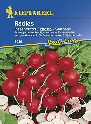 Radieschensamen - Radies Vitessa, Riesenbutter (Saatband) von Kiepenkerl