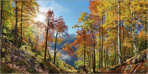 Posterlounge Leinwandbild 100 x 50 cm: Leuchtender Bergwald im Herbst von Michael Rucker - fertiges Wandbild, Bild auf Keilrahmen, Fertigbild auf echter Leinwand, Leinwanddruck