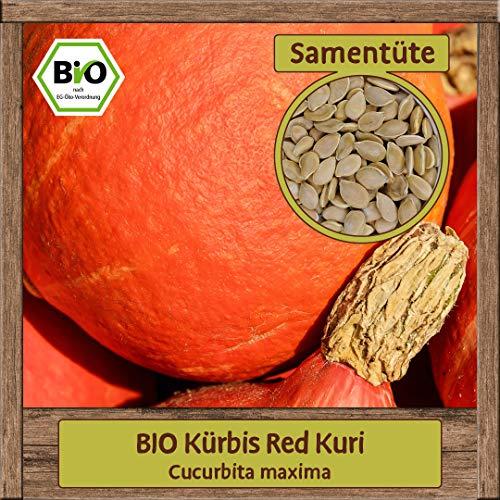 Samenliebe BIO Kürbis Samen Sorte Red Kuri Cucurbita maxima Gemüse-Samen Saatgut für ca. 7 Pflanzen