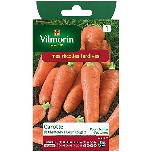 Vilmorin - Sachet graines Carotte de Chantenay à coeur rouge 2