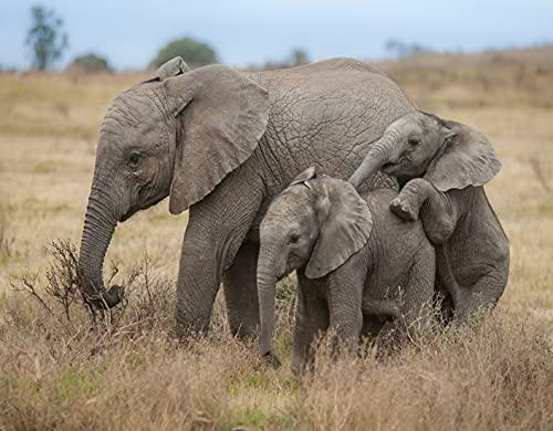 Kit de Pintura de Diamante 5D,Safari elefante mamá y bebé elefante en pastizales africanos,Bordado Pinturas Fotos Bricolaje Artesanía para la Decor de la Pared del Hogar,16' x 12'