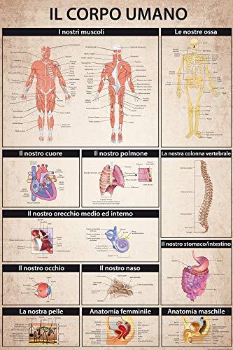1art1 Il Corpo Umano - Anatomia Muscoli Ossa Organi Poster Stampa Geante XXL (120 x 80cm)