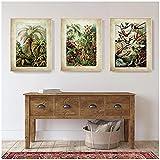 Chifang Ernst Haeckel Biologie Poster Palm Tree Prints