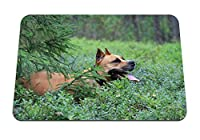 26cmx21cm マウスパッド (犬スタッフォードシャーテリアフォレストスプルース) パターンカスタムの マウスパッド